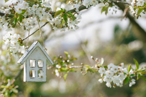 47945268 - little wooden house in spring with blossom cherry flower sakura